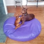 round 60 inch extra large incontinence pet bed replacement etsy